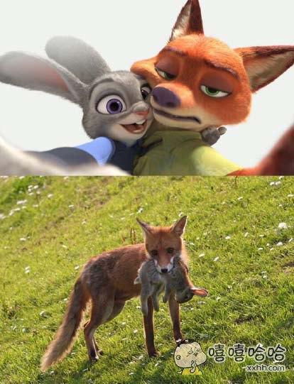 狐兔CP的理想与现实,我竟无法反驳