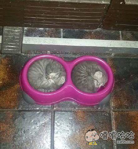猫咪似乎不知道这个是给它们吃东西的盘子