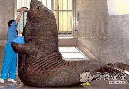 无论多大的动物,也是有一颗吃货的心~