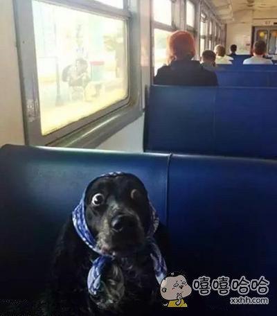 大婶,你哪一站下车啊?