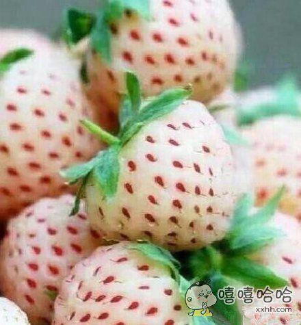 谁知道这是神马品种的草莓?