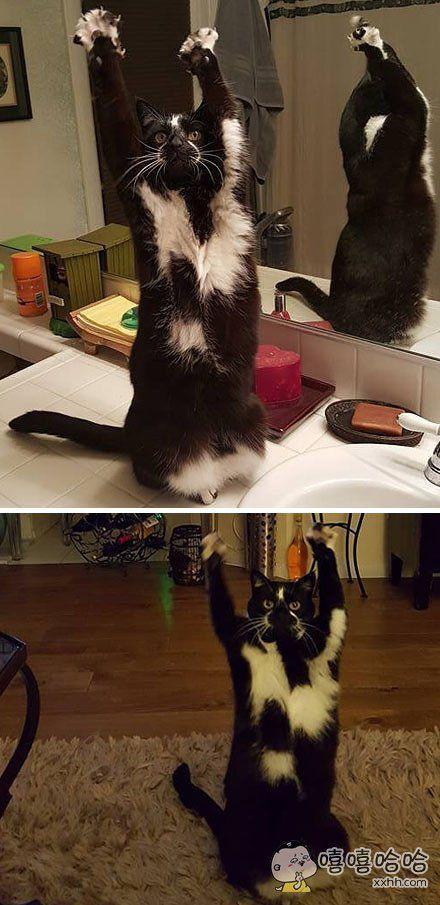 一只在乞食的猫,这猫是不是疯了?!