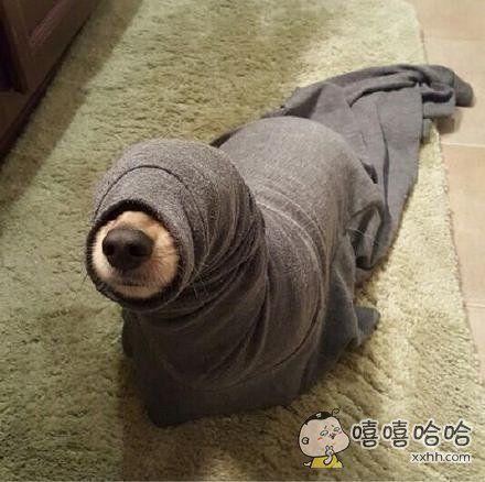 分享一只海狗