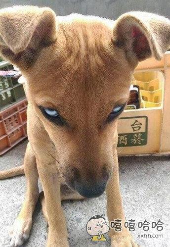 卧槽,这狗眼神好犀利啊