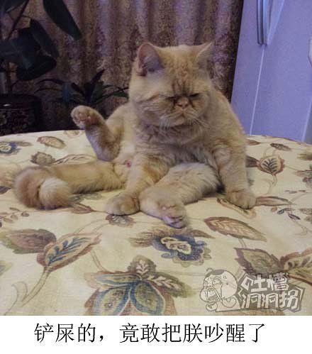 家里的猫整天一副二爷相。