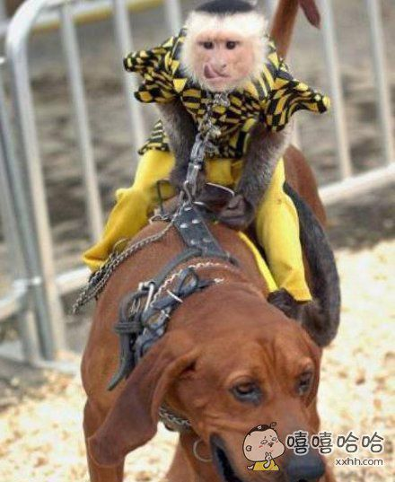 大师兄你的坐骑吃狗粮吗?
