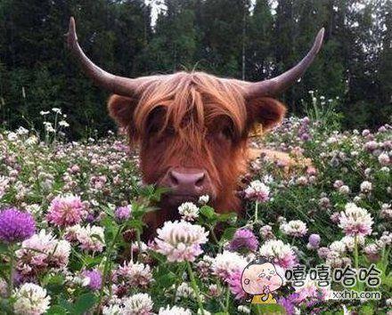 这是多少朵鲜花插在牛粪上了