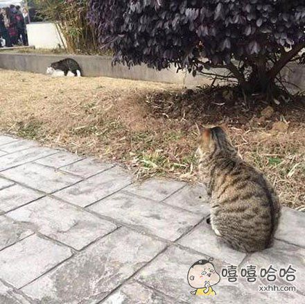 独自看猫片的单身喵