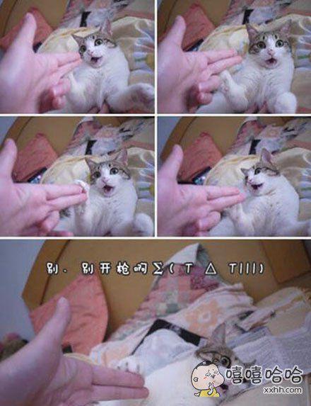 猫星人配合的还真到位