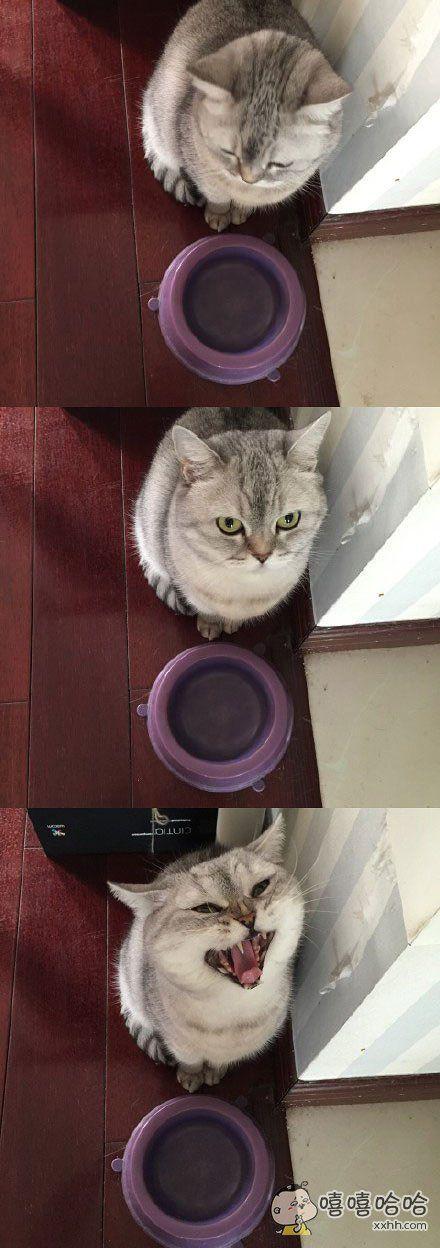 铲屎的,朕的猫粮呢!