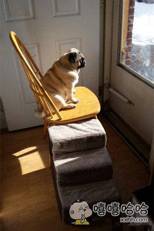 我家汪星人就喜欢在这晒太阳!