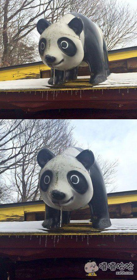 分享一只饥饿难耐的熊猫。