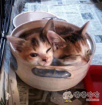 您的猫咪锅已新鲜出炉,要加香菜吗?