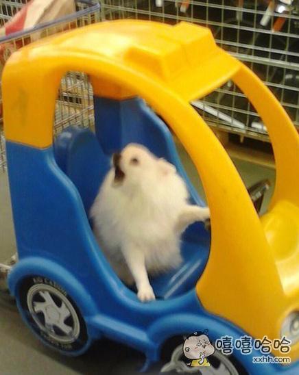 """一网友带狗狗去逛超市,带狗狗坐了会儿童车,然后他说""""该回家了""""时,狗狗就开始和他犟嘴了。。。"""