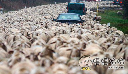 雄纠纠气昂昂,开车去放羊。