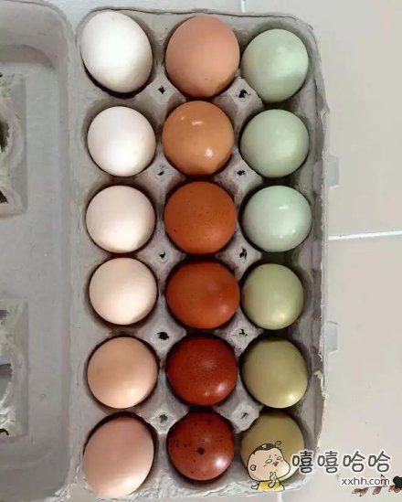 咱家鸡生的蛋,可以组成调色板