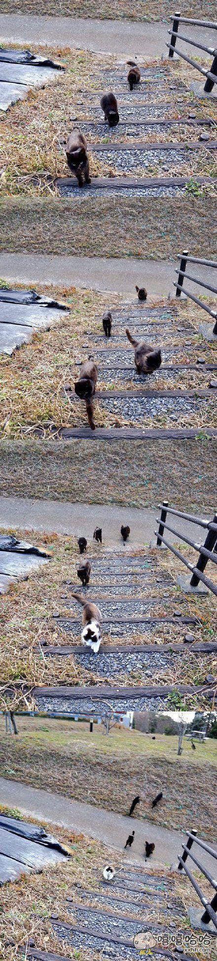 好多野猫纷至沓来,是要参加什么集会吗?