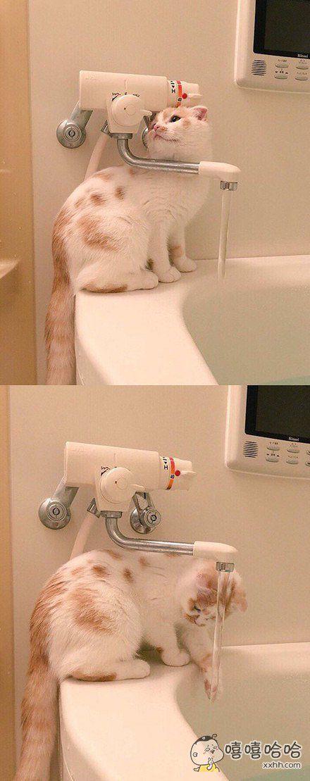 日本一网友说他家的喵学会了自己打开水管洗手……