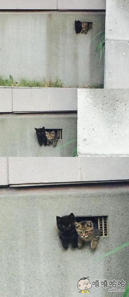 推上一妹子发现邻居墙上小洞里钻出两只小奶猫,关系融洽趴在一起看风景……墙裂萌!你家墙上长猫啦!!