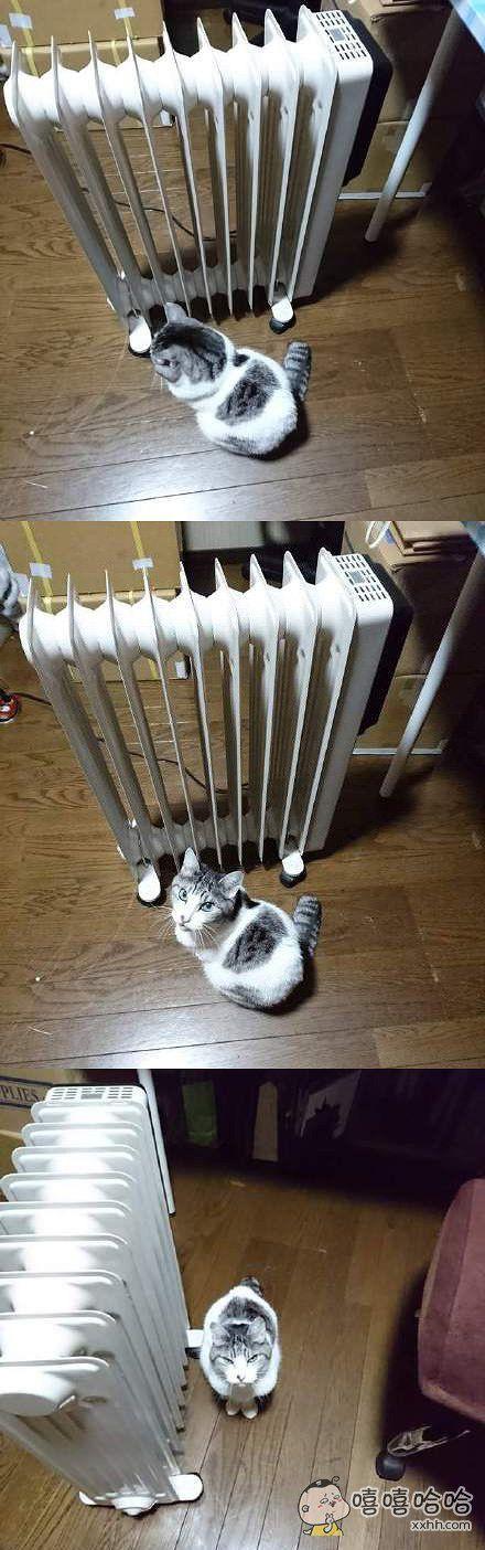 看什么看?还不快给本王打开!本王都冻了半天了!