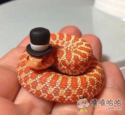 这条蛇你还怕吗?
