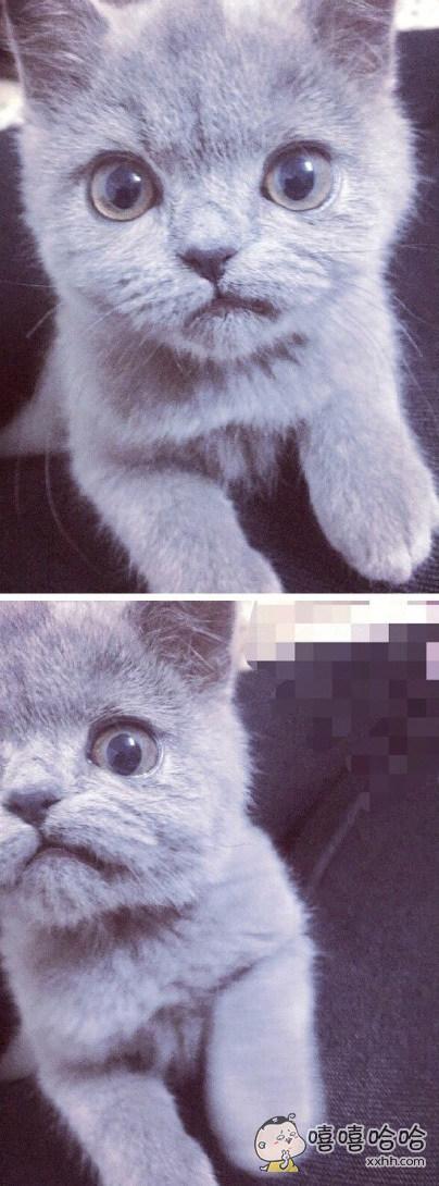网友发现自家小猫的嘴长歪了,简直是法式不屑!!哈哈哈哈!!