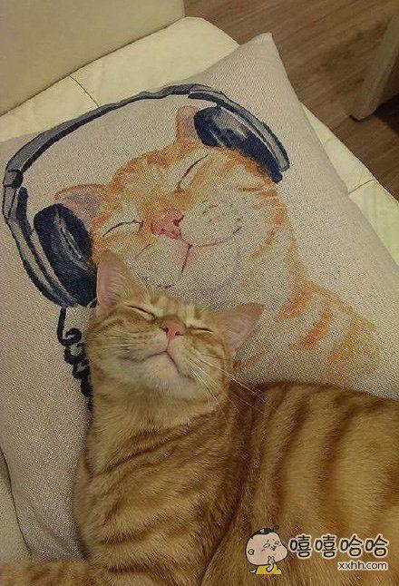 在网络上买了个枕头套,拿回家喵星人躺下去后给吓到了。。。喵星人又偷偷出去做兼职了