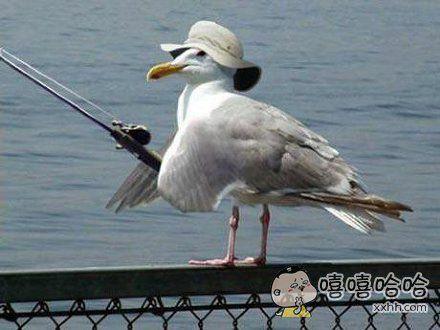 海鸥的捉鱼装备升级了