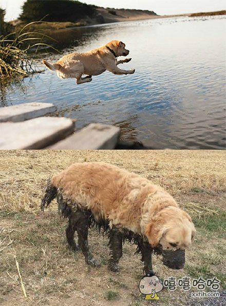 金毛:当时我以为那是个水池,然后。。就没有然后了。。。