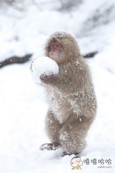 扔雪球已经不分种族的!
