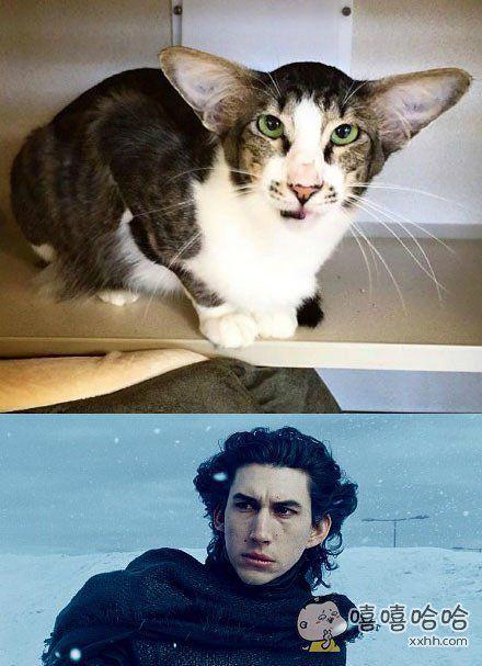网友发现她家猫长得非常像星战7里大反派凯洛·伦的扮演者Adam Driver,于是把照片po到网上,然后……火了,现在她表示非常希望这两个长得很像的家伙能见上一面