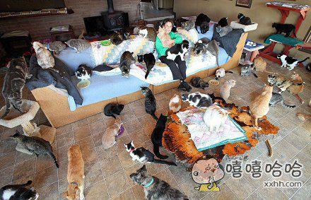 """美国""""疯狂""""猫迷收养1100只猫"""