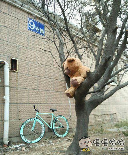 诸位都来看看,这是谁家的熊孩子啊,大清早就坐树上发呆,好像还是骑自行车来的呢