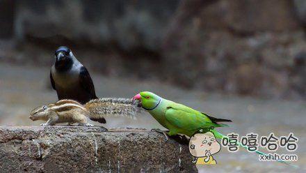 """一只毛茸茸的松鼠竟无视鸟类权威,窜上喂鸟台,埋头吃起坚果。红领绿鹦鹉怒了,拽住它的尾巴:""""把偷吃的吐出来!"""""""