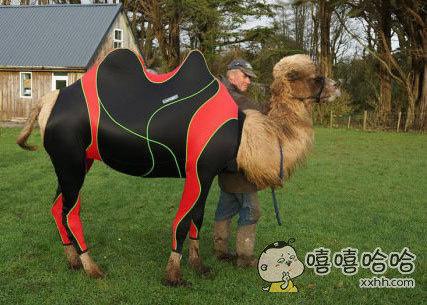 骆驼都有运动衣了。。。