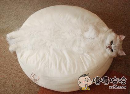 第一眼。。。。。。哈哈哈哈好胖的猫!!