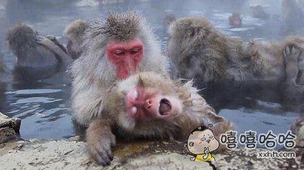 日本的猴子吧
