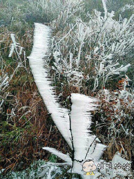 这样看来,昨晚下了一场非常生性的雪!