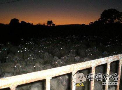 夜入羊圈。