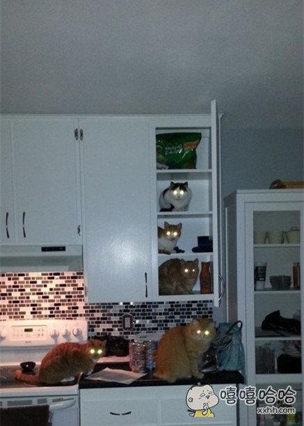 报告主人,整个厨房,已经被我们占领!