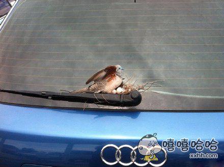 有房有车,鸟生幸福。