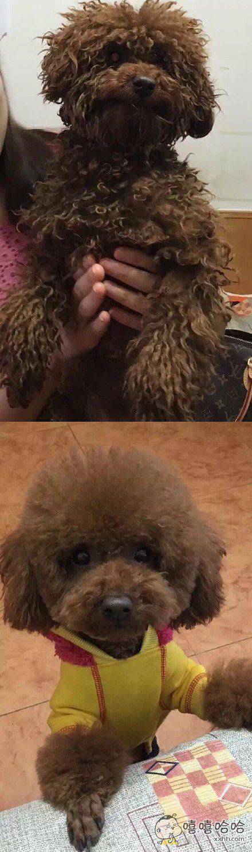 论修理发型对宠物的重要性
