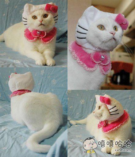真Kitty猫。