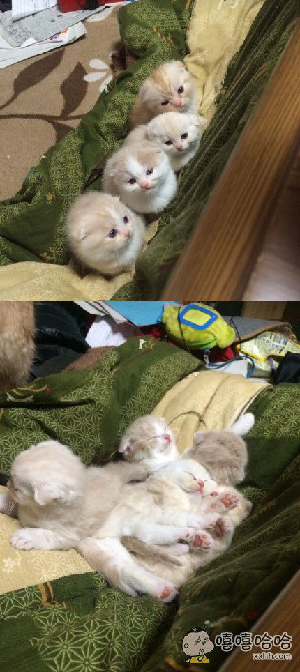 家里猫咪养多了就是这种下场,不仅铲屎要累死,还随时可能被萌死