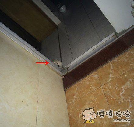 晚上爬起来上厕所没有开灯,结果被这货吓尿了