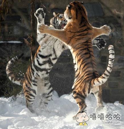 一起跳舞谈恋爱不如跳舞~~