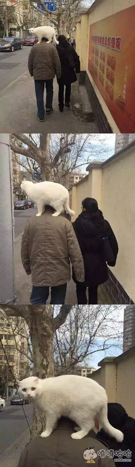 大爷,这样合适吗?是你溜猫啊还是猫溜你?