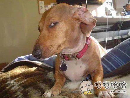 你嘴上说着去公园,眼神却指向了宠物医院,以为我瞎?