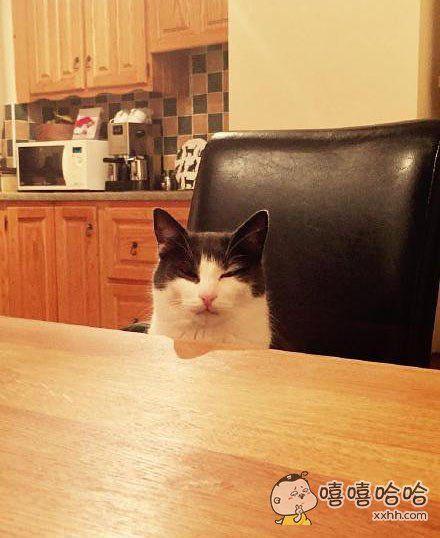 网友说:他不小心踢翻了喵喝的牛奶!!等他开始吃饭的时候,喵就这样在对面看着他!!