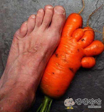 逆天胡萝卜